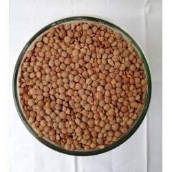 BIO Lentilles brunes VRAC