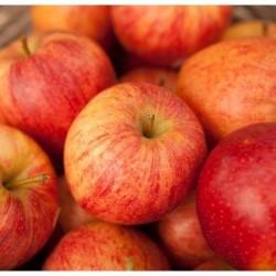 BIO Pommes suisses, 12kg env